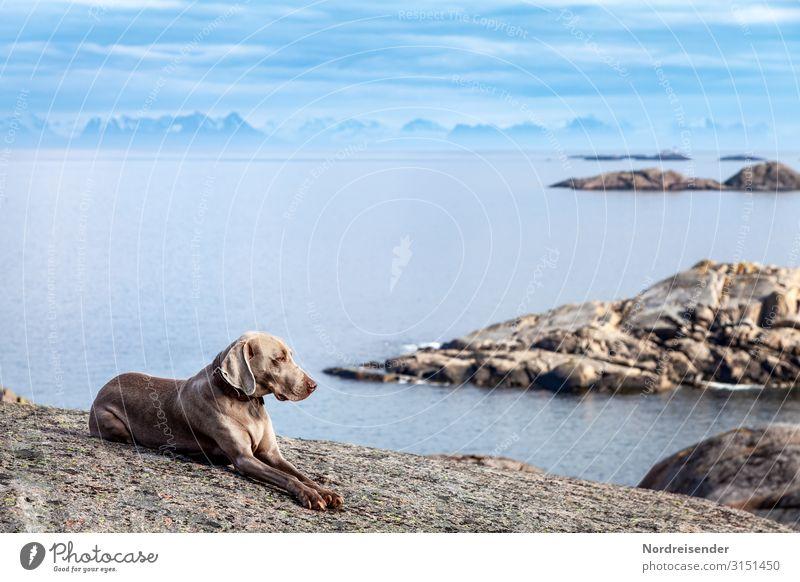 Mit dem Hund auf den Lofoten Ferien & Urlaub & Reisen Ferne Freiheit Meer Insel Natur Landschaft Urelemente Luft Wasser Himmel Wolken Schönes Wetter Felsen