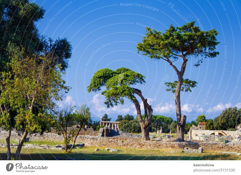 Landschaft mit dem griechischen Tempel. Paestum, Italien Ferien & Urlaub & Reisen Tourismus Kunst Kultur Park Ruine Architektur alt Poseidonia Akropolis