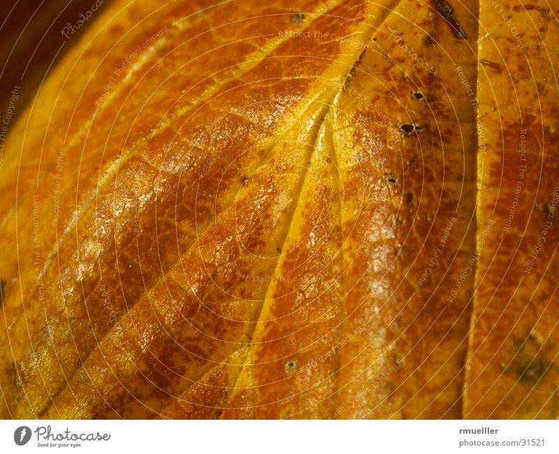 HerbstGold Natur alt Baum Blatt Farbe gold sentimental