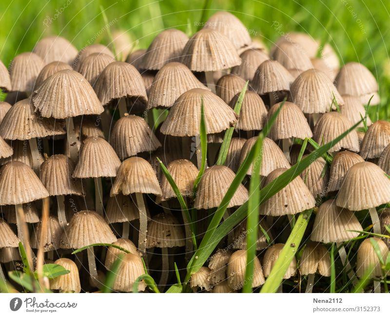 Gruppenbildung | hier riecht's doch nach ... Natur Garten pilze feld gruppierung menge viel gras Detailaufnahme draußen Boden