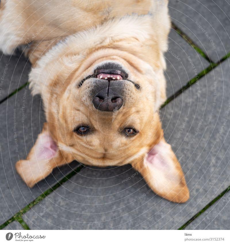 liegender Hund Haustier 1 Tier beobachten Blick warten Zufriedenheit Vorfreude Vertrauen Treue Hamburg kopfvoran Farbfoto Außenaufnahme Menschenleer