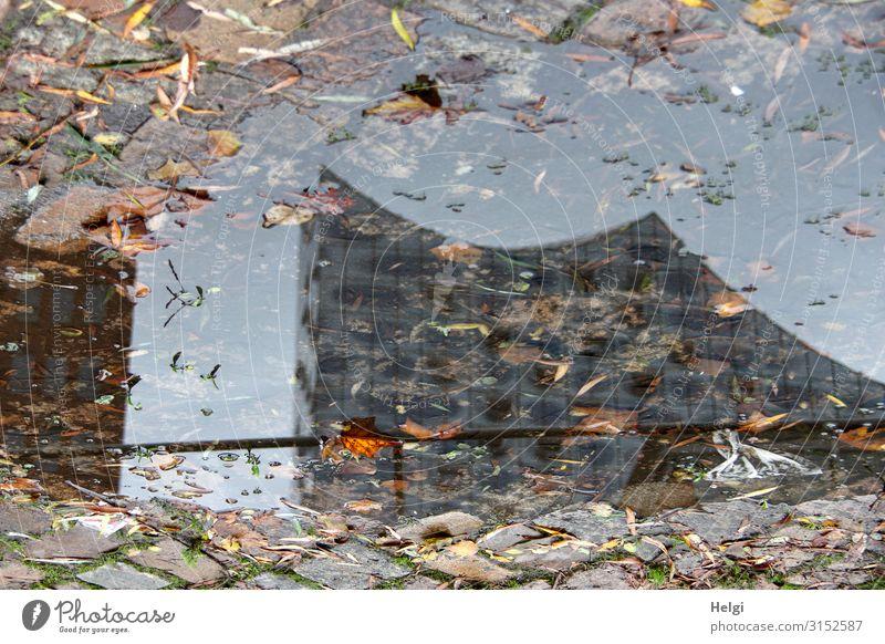 Spiegelung einer Hamburger Sehenswürdigkeit in einer Pfütze mit bunten Herbstblättern Blatt Stadt Bauwerk Elbphilharmonie Pflastersteine außergewöhnlich