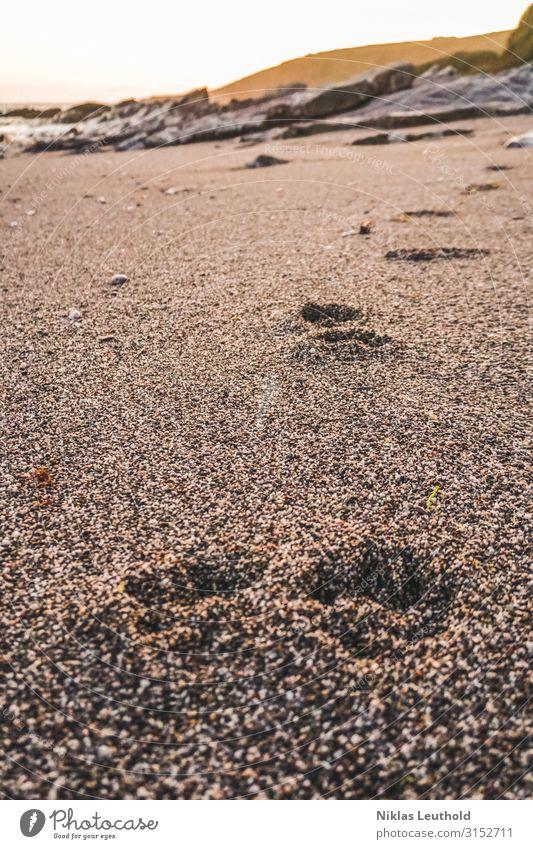 Spuren im Sand Sonne Strand Meer Umwelt Natur Sonnenlicht Sommer Schönes Wetter Küste Tier Hund Fährte 1 gehen laufen spurenlesen Abdruck Felsen Sandstrand