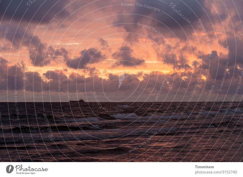 Abends an der Nordsee Ferien & Urlaub & Reisen Umwelt Natur Urelemente Luft Wasser Himmel Wolken Sonnenaufgang Sonnenuntergang Sonnenlicht Schönes Wetter Wellen