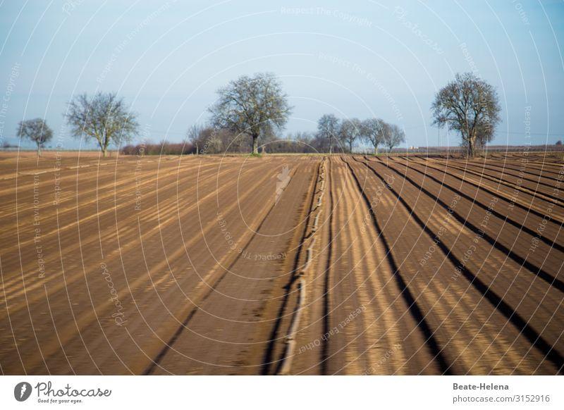 Der nächste Sommer kommt bestimmt Feld abgeerntet Licht Himmel Sonne Landschaft Natur Menschenleer Bäume karg Umwelt Schönes Wetter Herbst Erwartung