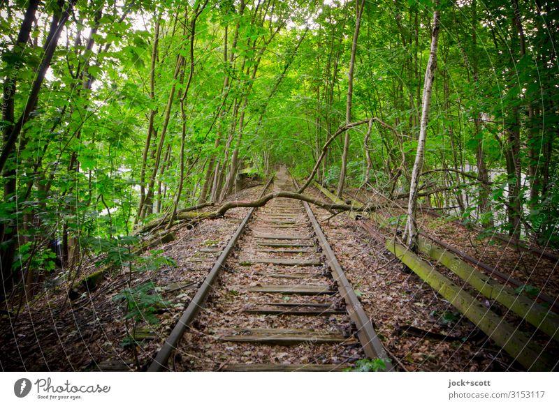 Gleise ohne Anschluss lost places Sommer Baum Ast S-Bahn Damm kaputt lang natürlich grün Stimmung Verschwiegenheit Romantik Einsamkeit Idylle Inspiration