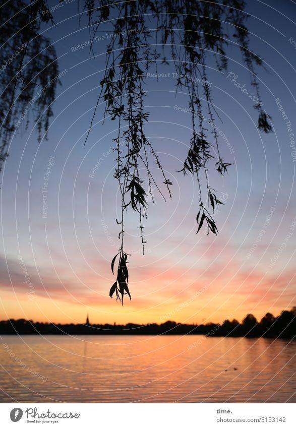 Alsterdämmerung Umwelt Natur Landschaft Wasser Himmel Horizont Sonnenaufgang Sonnenuntergang Baum Zweige u. Äste Küste Flussufer Strand See Alsterufer