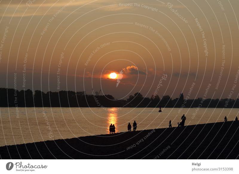 Silhouetten von Menschen bei Sonnenuntergang am Elbstrand in Hamburg Umwelt Natur Landschaft Wasser Herbst Schönes Wetter Flussufer Strand Elbe leuchten