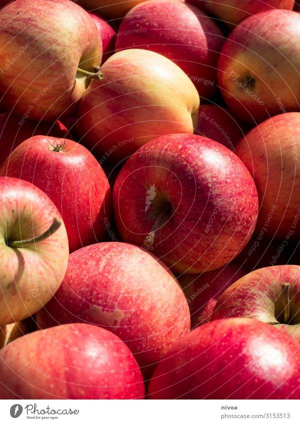 mehrere rote Äpfel Natur Pflanze Landschaft Baum Gesundheit Lebensmittel Essen Umwelt Gesundheitswesen Garten Freizeit & Hobby Ernährung Feld Schönes Wetter