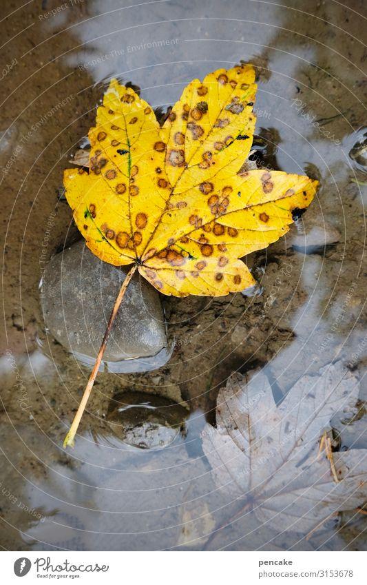 wassergrab Natur Pflanze Urelemente Wasser Herbst Blatt Wald Schwimmen & Baden Herbstlaub Pfütze gelb Punkt ertrinken Grab Tod Stein Farbfoto Außenaufnahme