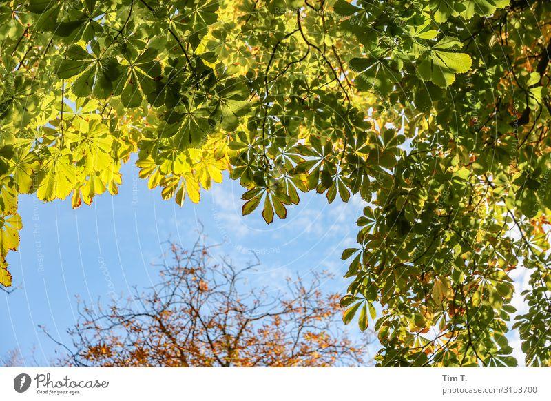 Prater Biergarten Umwelt Natur Baum Garten Prenzlauer Berg Stadt Hauptstadt Stadtzentrum Altstadt Menschenleer Farbe Ferien & Urlaub & Reisen Herbst