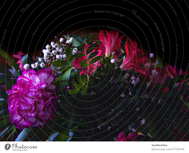 Blumenstrauß Freude Glück Wohlgefühl Feste & Feiern Geburtstag Umwelt Natur Pflanze Herbst Blüte mehrfarbig grün rosa rot schwarz weiß Sympathie Freundschaft