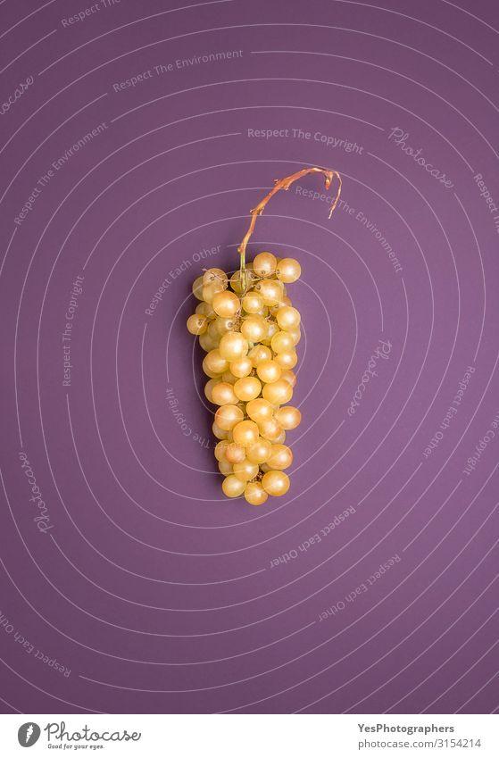Riesling weiße Traube auf violettem Hintergrund. Deutsche Trauben Frucht Gesunde Ernährung Herbst frisch natürlich Deutschland Johannisberger Rheingebiet