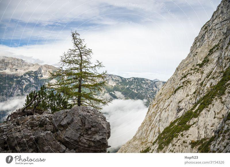 Baum auf dem Felsen Natur Landschaft Pflanze Himmel Wolken Herbst Schönes Wetter Alpen Berge u. Gebirge Gipfel entdecken Fitness laufen Ferien & Urlaub & Reisen