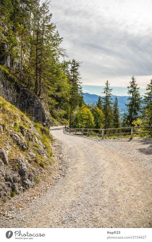Wanderweg in den Alpen Natur Landschaft Pflanze Himmel Wolken Herbst Schönes Wetter Baum Felsen Berge u. Gebirge Gipfel Diät Erholung Fitness laufen wandern