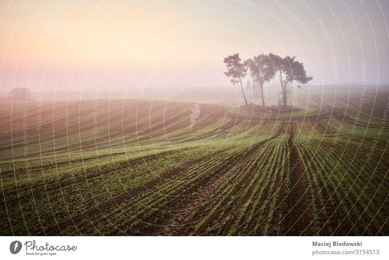 Szenischer nebliger Sonnenaufgang auf einem Feld schön Ferien & Urlaub & Reisen Natur Landschaft Himmel Herbst Nebel Baum Nutzpflanze Wiese Einsamkeit