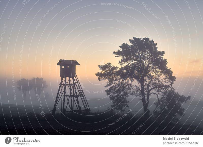 Hirschjagturm auf einem Feld im Herbst bei Tagesanbruch Jagd Natur Landschaft Himmel Nebel Baum Wiese Holz Einsamkeit einzigartig träumen Jagdturm Jagdkanzel