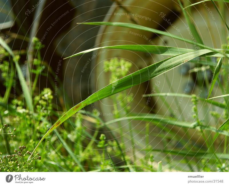 Ich mach Dich Platt... Natur grün Arbeit & Erwerbstätigkeit Gras PKW Feld Technik & Technologie Landwirtschaft Fahrzeug Traktor