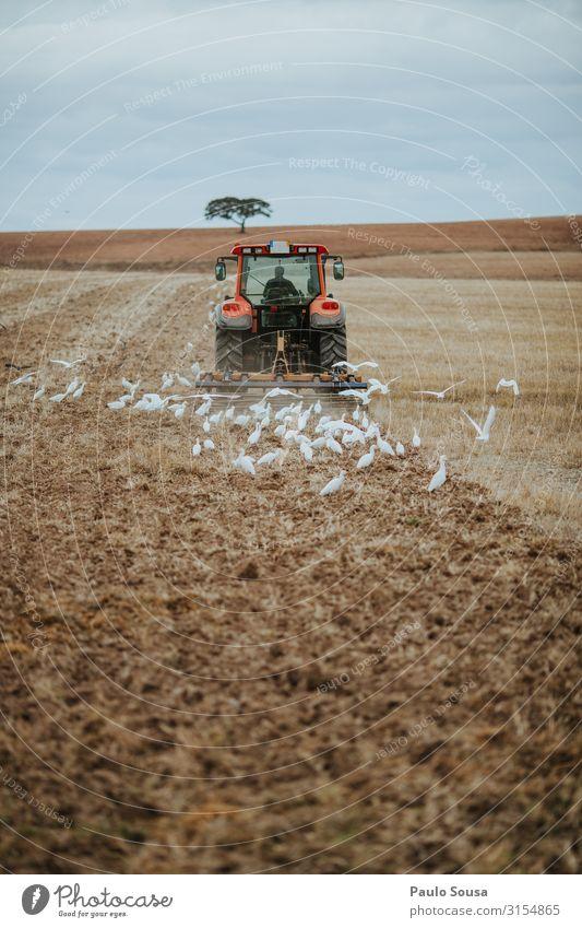 Traktor-Pflugfeld Arbeit & Erwerbstätigkeit Wirtschaft Landwirtschaft Forstwirtschaft Umwelt Landschaft Herbst Feld Alentejo Portugal Bewegung Business