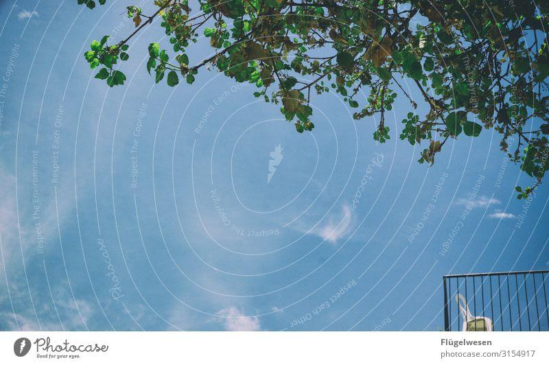 Balkonien Himmel Ferien & Urlaub & Reisen Sommer Baum Erholung Einsamkeit Pause Stuhl Feierabend ausruhend Gartenmöbel Aussteiger
