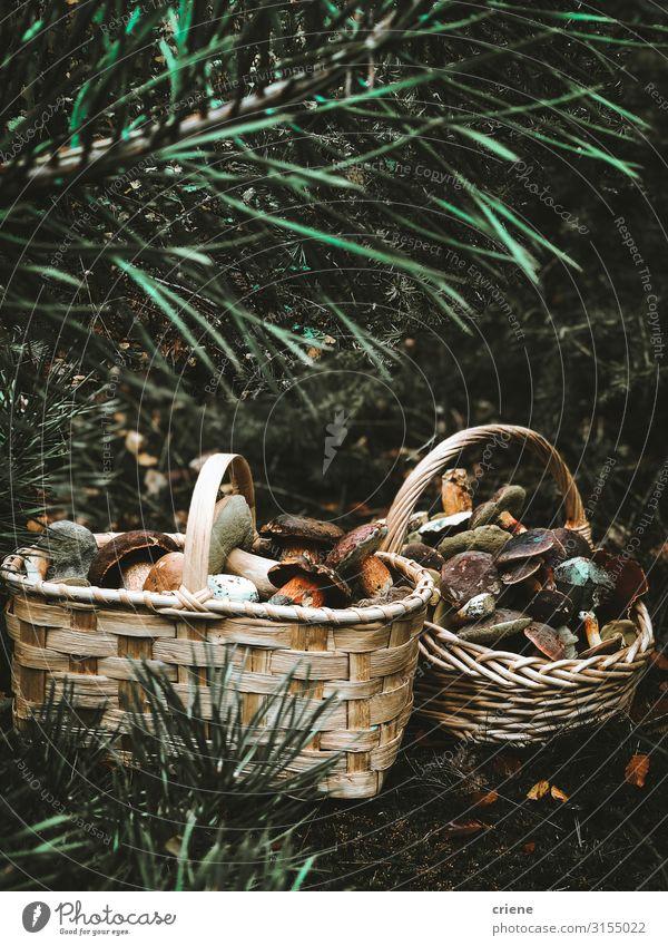 Pilze in einem Korb Lebensmittel Natur Gras Wald Weidenkorb Herbst Isoliert (Position) weiß grün braun Picknick leer natürlich frisch Sommer