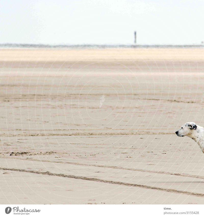 Strandkieker Umwelt Natur Landschaft Sand Himmel Horizont Schönes Wetter Küste Meer Nordsee Nordseeinsel Rømø Tier Haustier Hund Tiergesicht 1 beobachten Blick