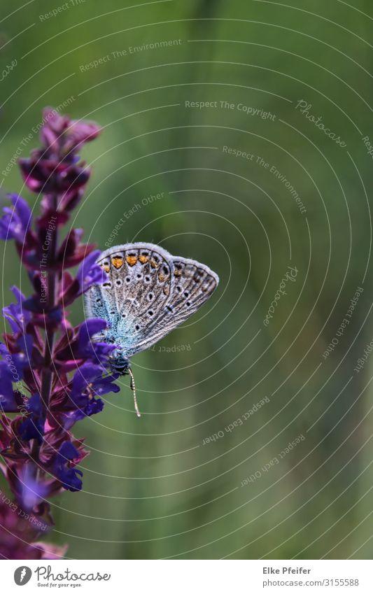 Natur Pflanze Farbe schön Blume Tier natürlich klein Stimmung elegant Wildtier violett Frieden Schmetterling Frühlingsgefühle Wildpflanze