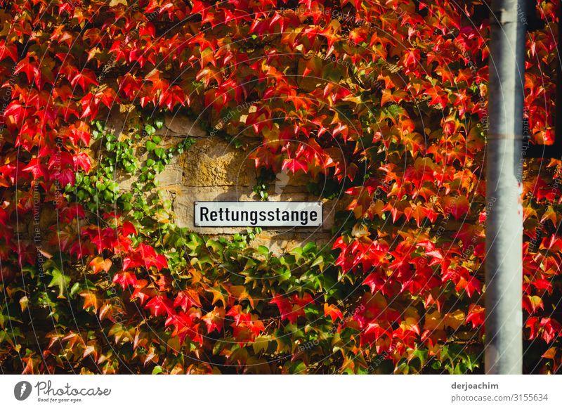 Rettungsstange Freude Zufriedenheit Ausflug Umwelt Pflanze Herbst Schönes Wetter Grünpflanze Wand Würzburg Bayern Deutschland Altstadt Hafen Mauer Stab Stahl