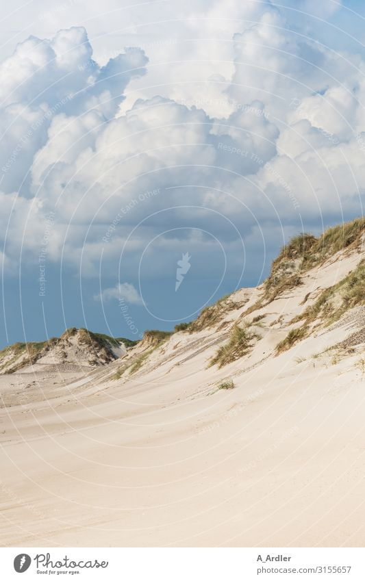 Strand mit Düne an der Nordsee Himmel Ferien & Urlaub & Reisen Natur Sommer Landschaft Meer Erholung Wolken Einsamkeit ruhig Ferne Berge u. Gebirge Tourismus