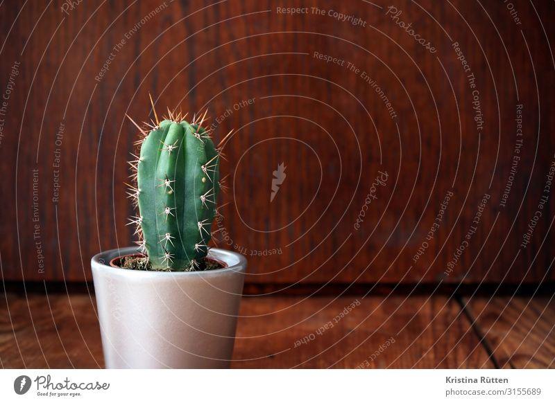 kleiner grüner kaktus Dekoration & Verzierung Pflanze Kaktus Topfpflanze Holz Spitze stachelig stetsonia coryne Dorn randdornen Zimmerpflanze drinnen Blumentopf