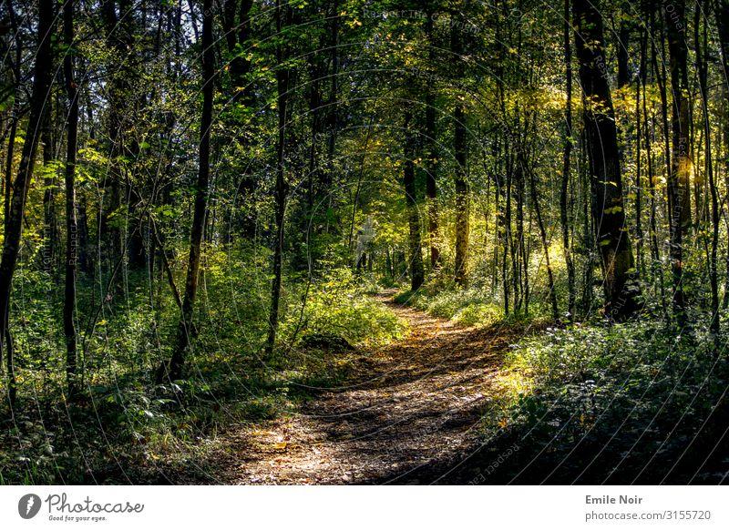 Spaziergang in der Innaue Natur Landschaft Pflanze Sonne Sonnenlicht Herbst Schönes Wetter Baum Blatt Wald wandern Farbfoto Außenaufnahme Tag Lichterscheinung
