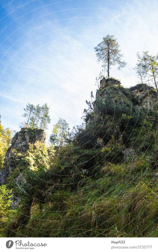 Alpen im Berchtesgadener Land Umwelt Natur Landschaft Pflanze Himmel Wolken Sonne Herbst Schönes Wetter Baum Gras Wald Felsen Berge u. Gebirge Gipfel Diät