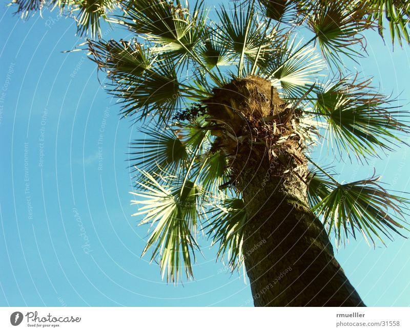 Fernweh Palme grün Ferien & Urlaub & Reisen Blatt Süden Sommer Pflanze Natur Himmel Nahaufnahme