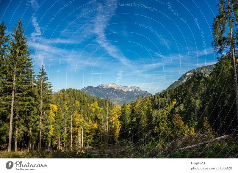 Alpen im Berchtesgadener Land Umwelt Natur Landschaft Pflanze Himmel Wolken Sonne Herbst Schönes Wetter Baum Wald Felsen Berge u. Gebirge Gipfel Diät Fitness