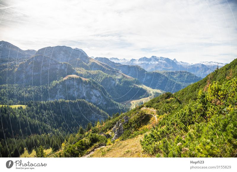Alpen im Berchtesgadener Land Umwelt Natur Landschaft Pflanze Himmel Wolken Sonne Herbst Schönes Wetter Baum Gras Wald Felsen Berge u. Gebirge Gipfel