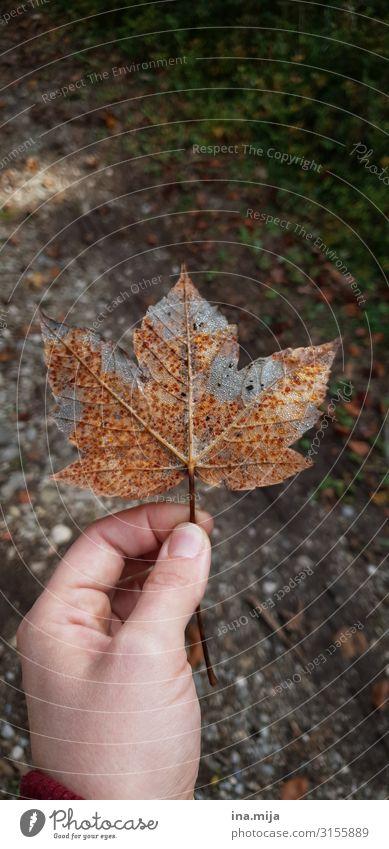 Herbst Gartenarbeit Gärtner Forstwirtschaft Förster Umwelt Natur Pflanze Blatt Park Wiese Wald natürlich Abenteuer Klima Umweltschutz Wandel & Veränderung
