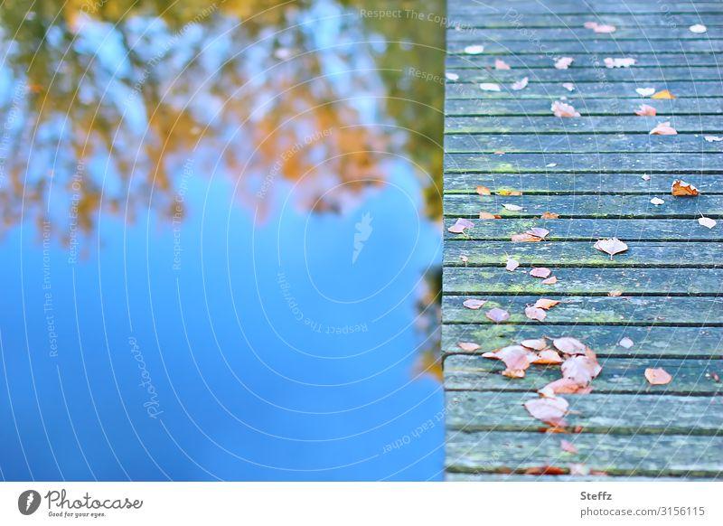 Herbst am blauen See Umwelt Natur Wasser Schönes Wetter Blatt Herbstlaub Seeufer Brücke Holz kalt schön braun orange Romantik achtsam ruhig Sehnsucht