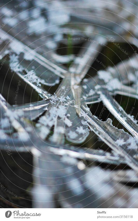 Gras und Frost Wintereinbruch Kälteschock winterliche Kälte Kälteeinbruch nordisch nordische Kälte dunkler Wintertag Raureif frostig graugrün klirrende Kälte