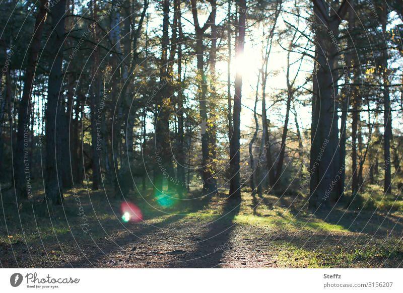 sie sind schon lange da Herbst besonderes Licht Baum Wald Waldrand Deutschland Europa Nordeuropa glänzend leuchten außergewöhnlich dunkel fantastisch schön blau