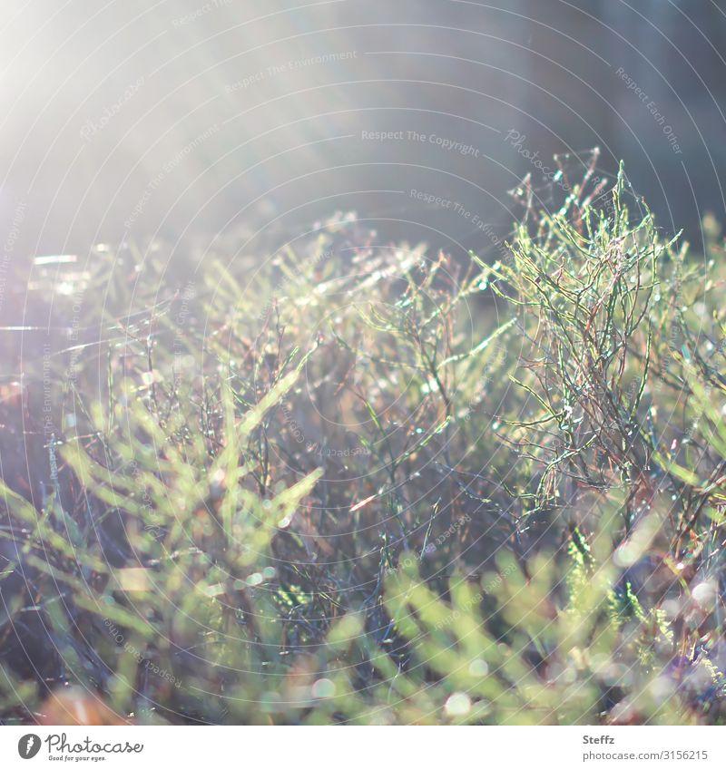 Unscharf | im Wald Umwelt Natur Herbst Wetter Schönes Wetter Pflanze Sträucher Wildpflanze Waldpflanze Herbstwald natürlich schön grün Waldstimmung