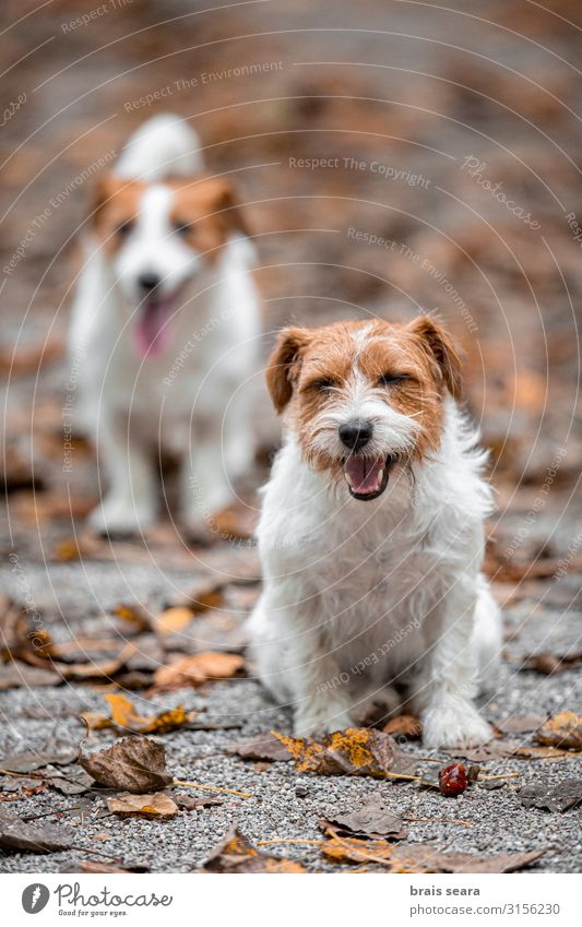 Zwei Hunde im Park. Freude Glück Spielen Freundschaft Natur Tier Herbst Wetter Baum Gras Blatt Wald Haustier 2 genießen springen Freundlichkeit Fröhlichkeit