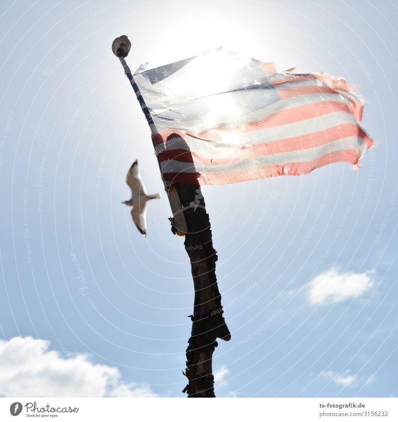 Möwe Jonathan wandert aus Natur Luft Himmel Wolken Sommer Klima Schönes Wetter Wind Küste Strand USA Stars and Stripes Tier Wildtier Vogel 1 Fahne Stock