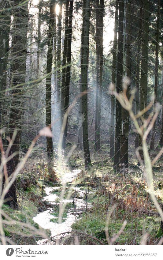 im Wald Ferien & Urlaub & Reisen wandern Natur Landschaft Herbst Bach braun grün Romantik Baumstamm Herbstlaub Waldboden Wildbach Farbfoto Außenaufnahme