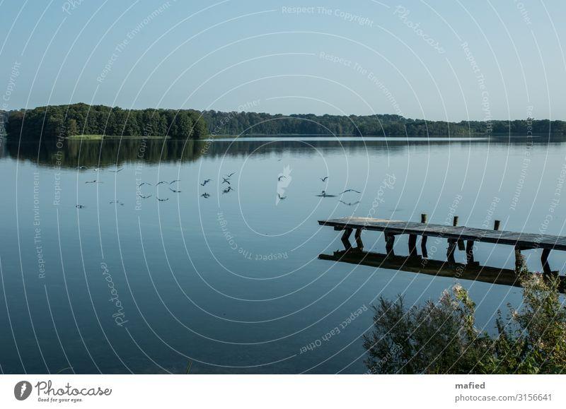 Guten Morgen Sommer Sommerurlaub Natur Landschaft Luft Wasser Wolkenloser Himmel Schönes Wetter Wald Seeufer Pinnow Dorf Steg Erholung blau grün ruhig Farbfoto