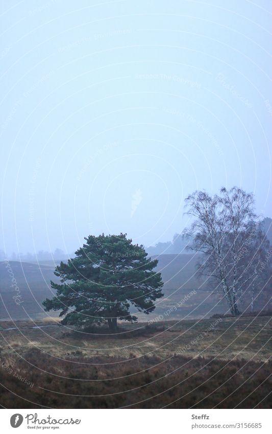 Novemberbild Umwelt Natur Landschaft Himmel Wolkenloser Himmel Herbst Baum Heide Herbstlandschaft natürlich trist blau braun ruhig Einsamkeit Novemberstimmung