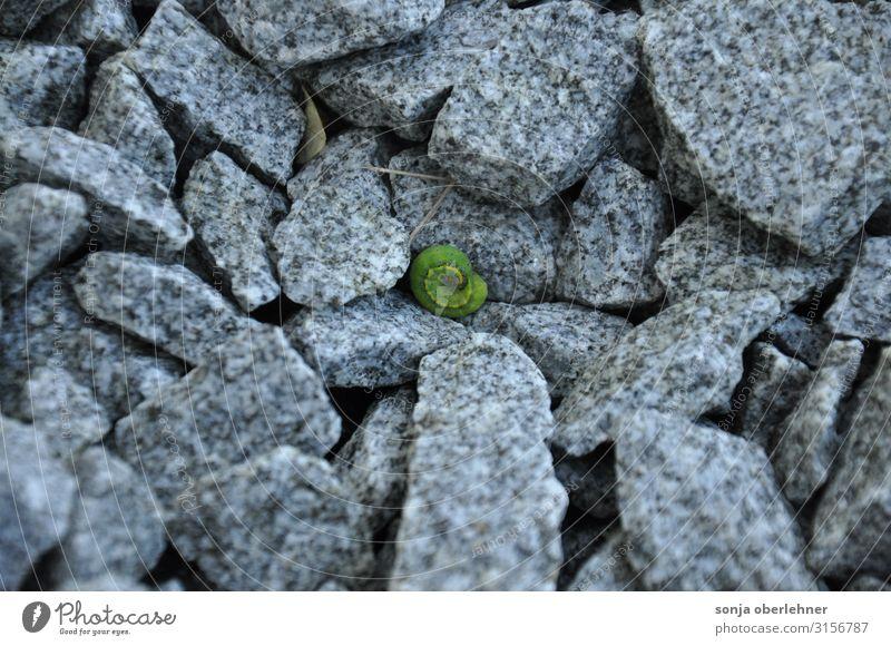 eingerollte grüne Raupe auf Granit Steinen Kiesrüben Granitbruch Tier 1 grau Farbfoto Außenaufnahme Nahaufnahme Textfreiraum links Textfreiraum oben