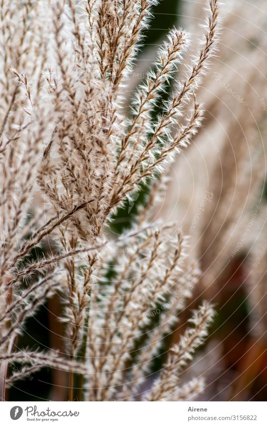 Planten...   UT Hamburg Pflanze Gras Wachstum Warmherzigkeit weich zart kuschlig Sympathie