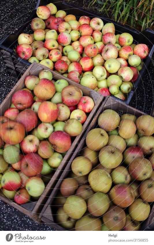 drei Kisten, voll  mit frisch geernteten verschiedenen Apfelsorten Lebensmittel Ernährung Bioprodukte Vegetarische Ernährung Diät Umwelt Natur Pflanze Herbst