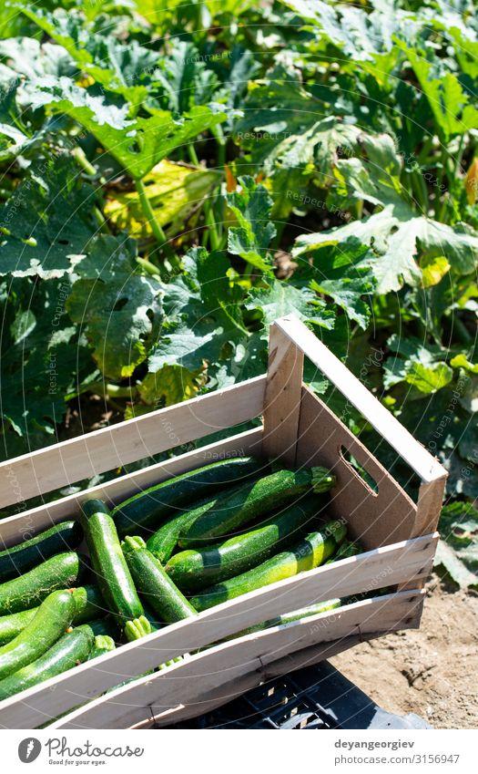 Natur Sommer grün Blume Holz natürlich Garten Frucht frisch Wachstum Gemüse Bauernhof Ernte Vegetarische Ernährung reif Kiste