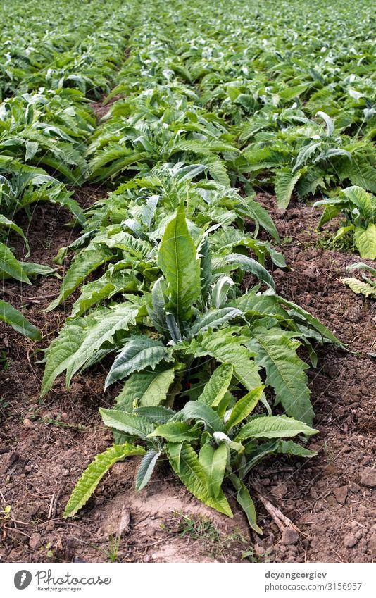 Natur Sommer Pflanze grün Landschaft Blatt natürlich Aussicht Wachstum Kultur Industrie Gemüse Bauernhof Ernte Vegetarische Ernährung Ackerbau